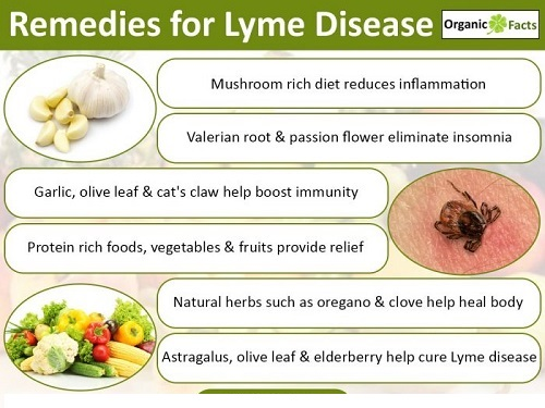 lymediseaseremedyinfo